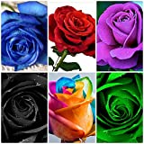 Bee Garden(6 Varieties) Mixed Variety Rose Flower Seeds (Rainbow, Red, Purple, Green, Blue, Black)