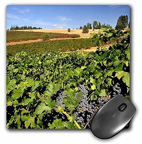Danita Delimont - Vineyards - USA, California, Apple Hills Vineyard - US48 RDU0077 - Richard Duval - MousePad (mp_96608_1)
