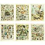 Meishe Art Vintage Poster Print Biology Botanical Science Wall Decor Sea Creature Animals Seashell Vegetables Birds Breeds Species Eggs Identification Chart Flowers Blooming Floral Set 6pcs