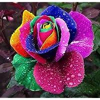 200pcs 24 tipo de Rose Semillas Raras Hermosa semilla de flor ornamental Balcón y patio Bonsai Semillas crecimiento natural Para el hogar roja del jardín