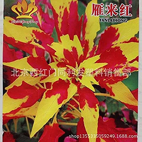 Freies Verschiffen 40 Amaranthus tricolor Samen Frühe Splendor Grassamen, Blattpflanzen Originalverpackung h10 1