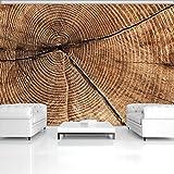DekoShop Fototapete Vlies Tapete Vliestapete Moderne Wanddeko Wandtapete Wand Dekoration Querschnitt Vom Baumstamm Ringe AMD2006V8 V8 (368cm. x 254cm.) Wallpaper Tapetenkleister und Überraschungsaufkleber Gratis