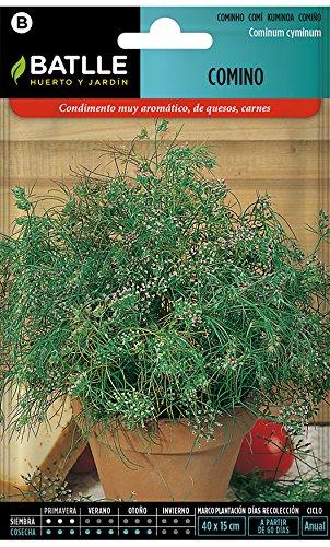 Graines aromatiques de Batlle - Cumin (Seeds - 20cm)