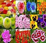 Beautiful Combo 10 Types Winter Season Flower Plant Seeds, Sold By VasuWorld