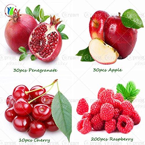 4 Art Früchte, Bonsai-Obstbaum-Samen, Gemüse und Fruchtsamen Köstliche Kirsche. Granatapfel. Himbeere. Apple insgesamt mehr als 100 Samen