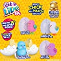 Little Live Pets 28324 Surprise Chick Toy