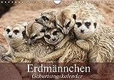 Erdmännchen (Wandkalender 2019 DIN A4 quer): Die talentierten Bluffer und Buddler aus Südafrika (Geburtstagskalender, 14 Seiten ) (CALVENDO Tiere)