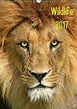 Wildlife 2017 (Wandkalender 2017 DIN A3 hoch): Wildlife-Fotografie (Monatskalender, 14 Seiten ) (CALVENDO Tiere)