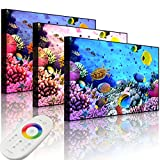Lightbox-Multicolor | LED Bild Leuchtbild | Bunte Fische über Korallenriff | 60x40 cm | Front Lighted