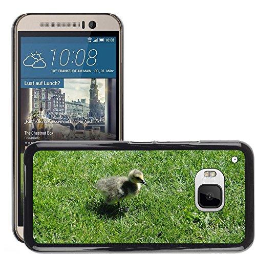 Nur Handy HOT Style Handy PC Hard Case Cover//m00139083Gosling Ente Küken Vogel Baby Young//HTC One M9