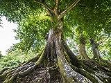 Lais Puzzle Großer alter Baum 1000 Teile