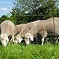 Eider AGRARnet Schafnetz in 108cm 2 Spitz 50 m lang - Agilitynetz in Top Qualität - Auch für große Hunde als Agilitynetz - Standfest durch 2 Spitzen von Eider Landgeräte GmbH auf Du und dein Garten