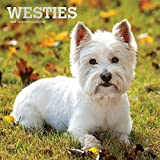 West Highland White Terriers - Westies 2019 - 18-Monatskalender mit freier DogDays-App (Wall-Kalender)
