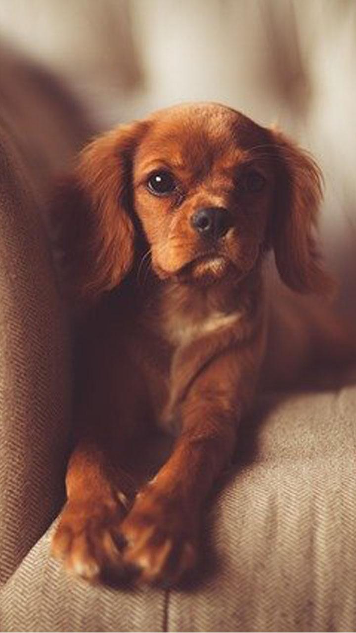Cute Puppy Wallpaper Amazon De Apps Fur Android