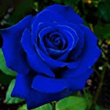 Benoon Semillas De Rosas, 50 Piezas/Bolsa Semillas De Rosas Plantas De Semillero De Flores Rústicas Azules Multiusos Naturale