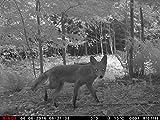 MINOX DTC 1100 Wildkamera und Beobachtungskamera - 6