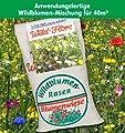 GHZ 108555-B Captain Green Wildblumenrasen 1 Kg von GHZ auf Du und dein Garten