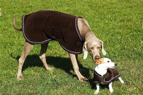Artikelbild: EQUI-THÈME 'Polar' Hundedecke braun Einfassung hellblau Rückenlänge 46cm