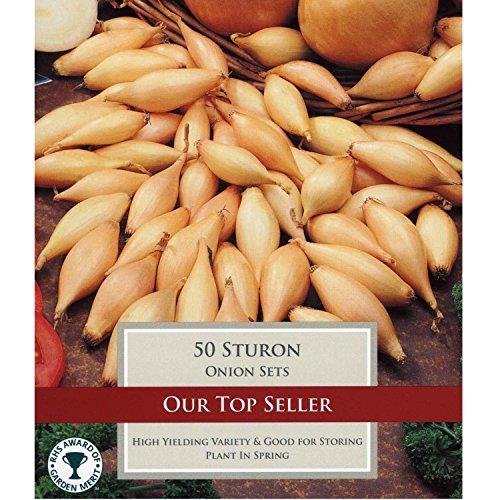"""50x Gemüse Zwiebeln """"Sturon"""" Steckzwiebeln zum Anbauen"""