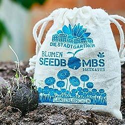 Die Stadtgärtner Seedbombs | Gänseblümchen | 8 handgemachte Samenbomben für tolle Blumen