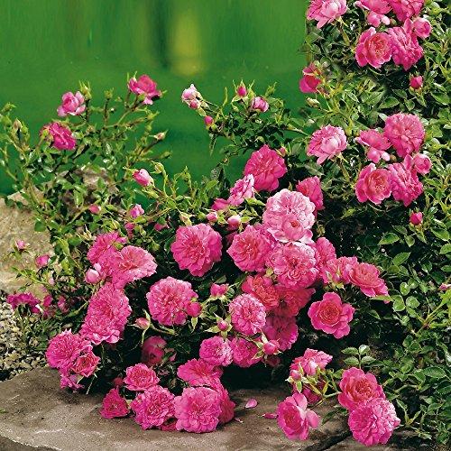 Garten Schlüter 55931