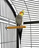 #5: 8 Inches / 20 cm Natural Habitat Wooden Perch / Stand / Toy for Birds (Light Weight)