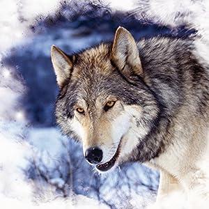 Nintendo DS Case Skin Sticker aus Vinyl-Folie Aufkleber Schnee Wolf Hund