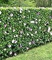 BALDUR-Garten Winterharte Hibiskus-Hecke, 10 Pflanzen, Hibiscus Syriacus von Baldur-Garten auf Du und dein Garten