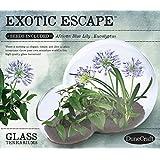 Dunecraft Exotic Escape Terrariums
