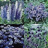 Blauer Sommergarten - 12 pflanzen