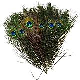 Unicoco Lot de 30Plumes de paon naturelles, Taille 25à30cm, idéales comme décoration de carnaval