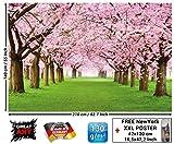 Tapiz de foto Flored del cerezo Mural Decoración Flores Primavera Jardín Plantas Bosque Parque Naturaleza Cherry Tree Árbol cerezo Avenida I foto-mura