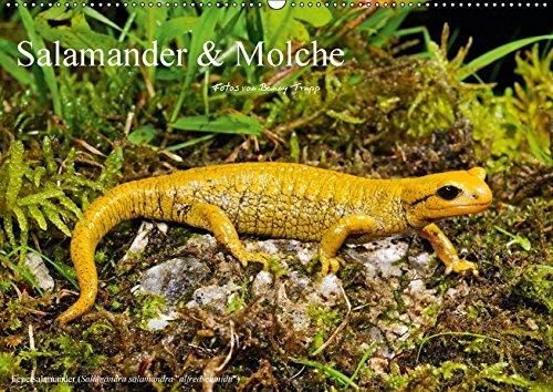 Salamander und Molche (Wandkalender 2018 DIN A2 quer): Fotokalender mit Bildern von Molchen und Salamandern (Monatskalender, 14 Seiten ) (CALVENDO Tiere) [Kalender] [Apr 01, 2017] Trapp, Benny