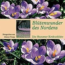 Blütenwunder des Nordens: Die Husumer Krokusblüte