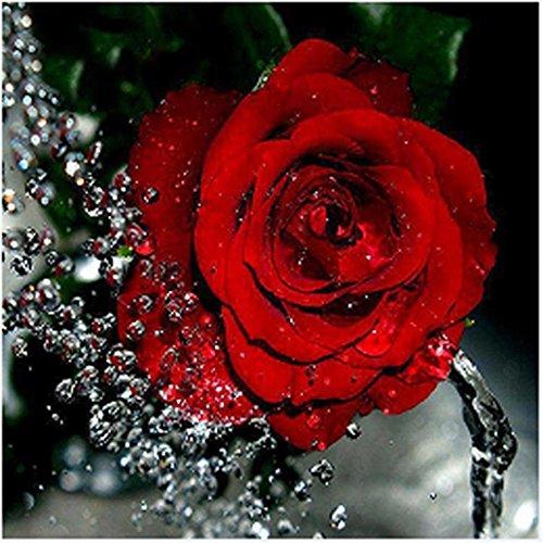 Riou DIY 5D Diamant Painting voll,Stickerei Malerei Diamant Rote Rose Blumen Bild Muster Crystal Strass Stickerei Bilder Kunst Handwerk für Home Wand Decor gemälde Kreuzstich (Mehrfarbig, 30 * 30cm) -