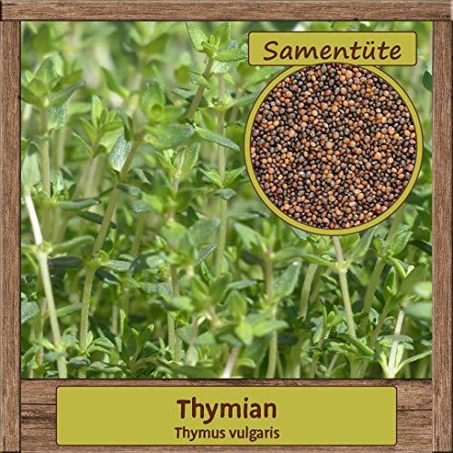 Samenliebe 1500 Thymian Samen Thymus vulgaris Kräuter-Samen mehrjährig Saatgut für ca. 1,5m²