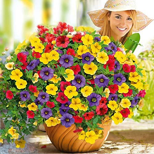 MEIGUISHA Gartensamen- Hängende Petunien Blumensamen gemischte Farben Blume Staude Bonsai Petunia Samen mehrjährig winterhart Leuchten Ihren Garten (50) - Petunia Samen