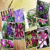 venta grandes vendedores calientes 100pcs semillas de flores semillas mezcla clematis bonsai jardín de DIY el envío libre