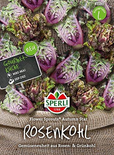 Kohlsamen - Rosenkohl Flower Sprout Autumn Star von Sperli-Samen