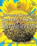 Bernard Lavery's Secrets of Giant Sunflowers