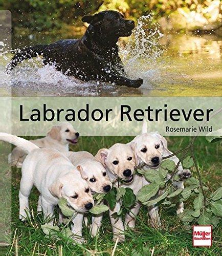 Labrador Retriever (Hunderassen) (Große Labrador-retriever)