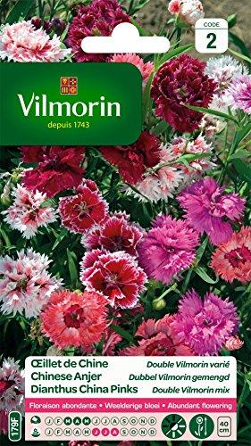 Vilmorin 5433642 Œillet Multicolore, 90 x 2 x 160 cm