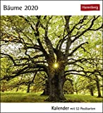 Bäume Postkartenkalender 2020. Wochenkalendarium. Blockkalender. Format 16 x 17,5 cm -