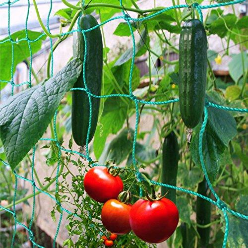 GardenGloss® Premium Ranknetz mit großer Maschenweite für besonders ertragreiche Ernte von Gurken, Tomaten und Anderen Gemüsepflanzen - Rankhilfen für Kletterpflanzen - Größe: 2,50 x 2m