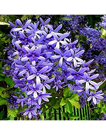 Flower Plants: Buy Flower Plants Online at Best Prices in
