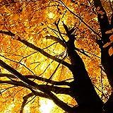 Pixblick - Baum im Herbst - Hochwertiges Wandbild - Hartschaumplatte 150 x 150 cm