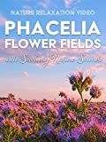 Nature Relaxation Video: Phacelia Flower Fields with Soothing Nature Sounds