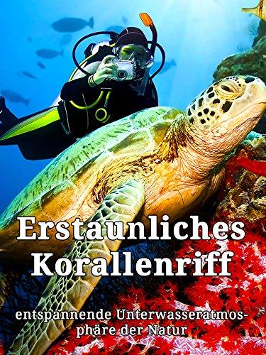 Erstaunliches Korallenriff - entspannende Unterwasseratmosphäre der Natur