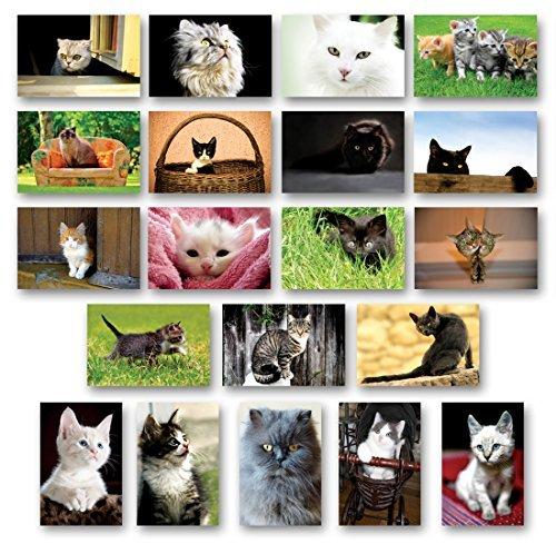 Gattini cartolina set di 20cartoline. kitten post di varietà confezione. made in usa.