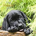 Hunde 2018 - Tierkalender, Fotokalender, Wandkalender, Hundekalender - 30 x 30 cm